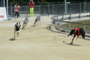 Greyhound Park Motol 6