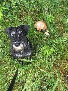 Heidin Eda se v Beskydech ukázal jako skvělý houbař